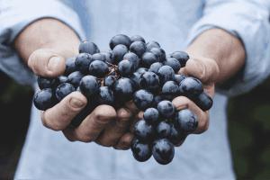Uva e produzione vino