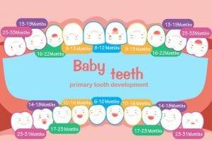 Calendario della dentizione