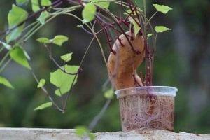 Giardinaggio per bambini: una vigna di patate