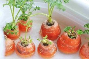Giardinaggio per bambini: le carote